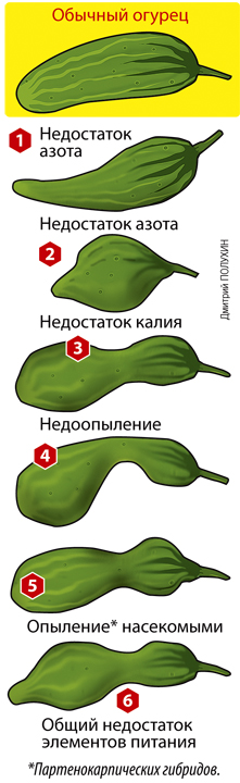 . Фото: Дмитрий ПОЛУХИН