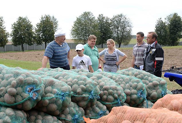 Про собственноручно выращенную картошку президент Беларуси рассказывал и в прошлые годы. Фото: president.gov.by