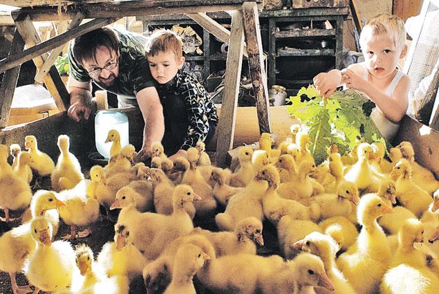 В Кремле не видят проблем с запретом на ввоз в Россию европейского продовольствия. У нас своих гусей хватает, тоже можно делать фуа-гра. Фото: RUSSIAN LOOK