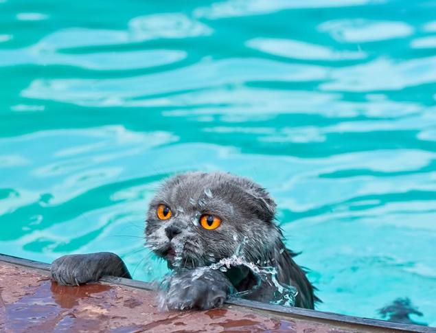 - Не-ет! Хватит с меня вашего Египта! Вашего олл инклюзива! И вашего бассейна! Фото: СОЦСЕТИ