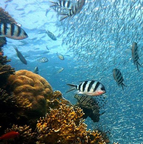 Фестиваль «Дикий подводный мир»