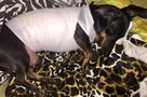 Белгородец собирается судиться с ветклиникой, где его собаку спасли от отравления