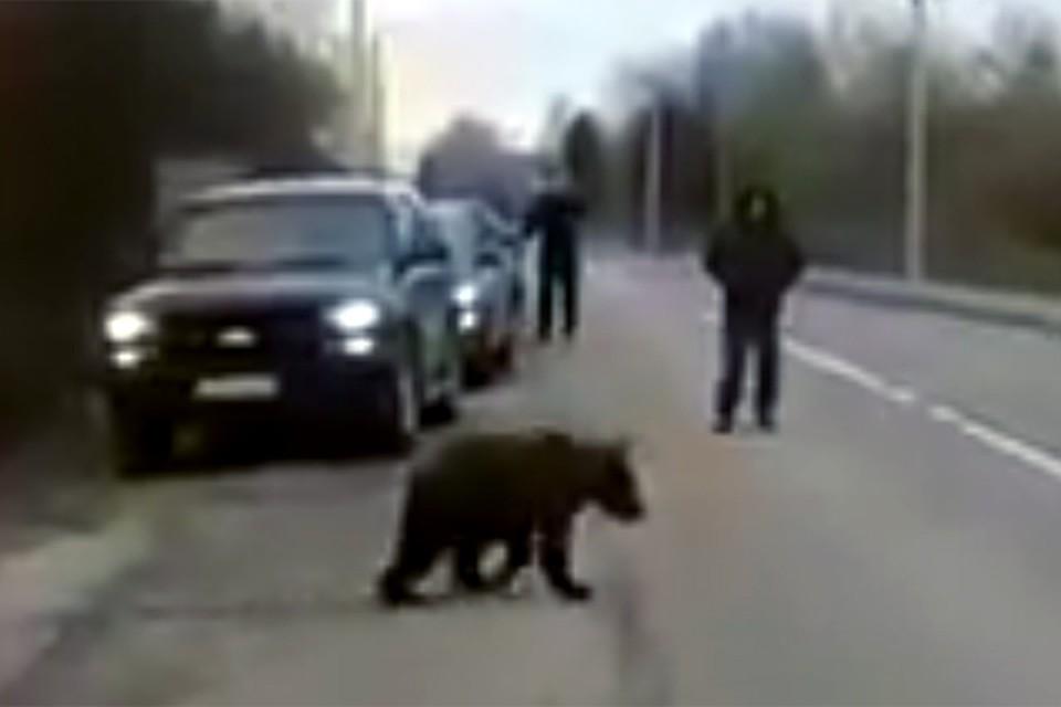Видео поймали в лесу фото 153-490