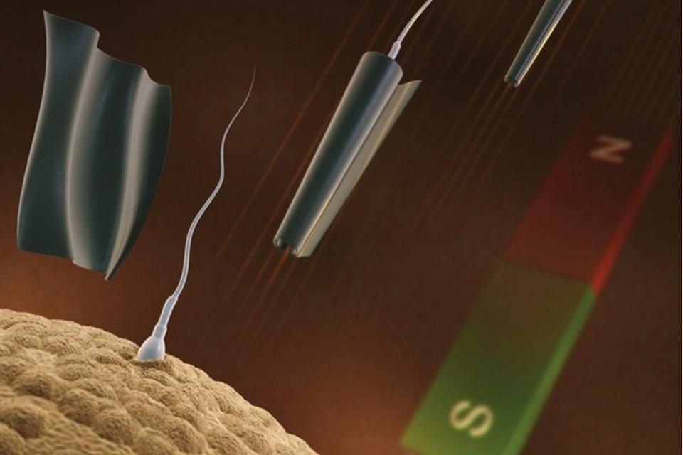 Сила сперматозоидов в их хвостиках