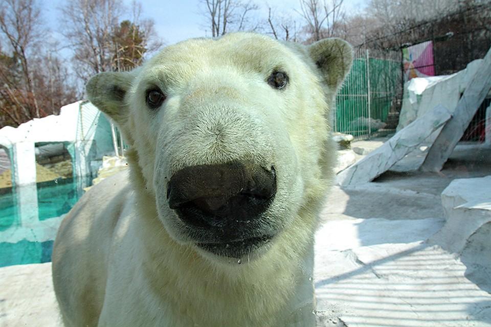 Игровые аппараты белый медведь форум по голден интерстар