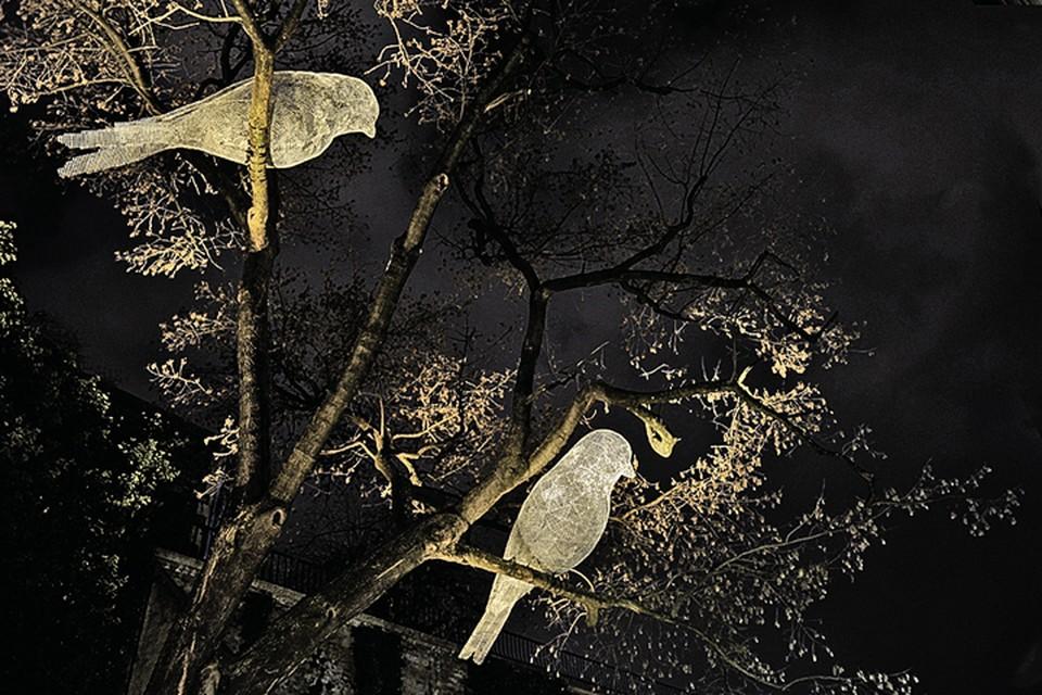 Художник Седрик Ле Борн покажет гостям фестиваля своих волшебных птиц... Фото: Предоставлено организаторами фестиваля