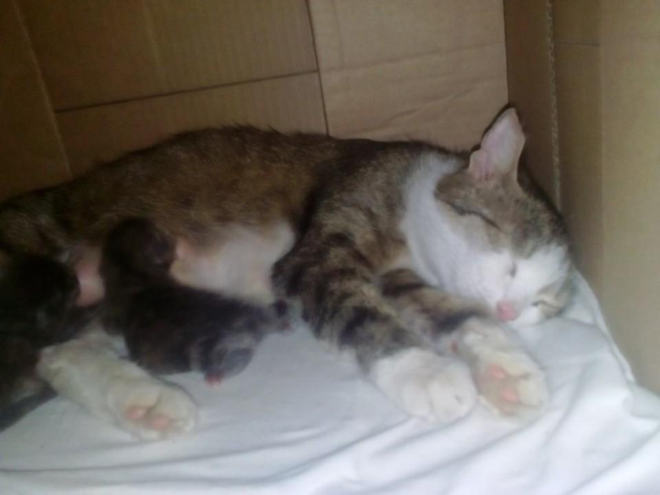 """Жители Тюмени нашли слепым котятам с помойки бездомную кормящую кошку. Фото группы """"ЧП Тюмень"""" vk.com"""