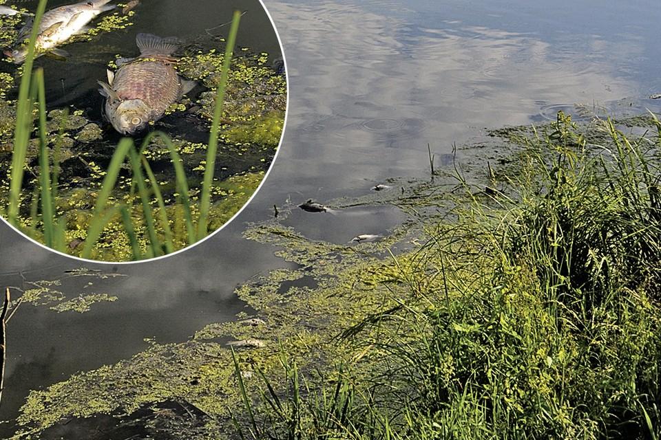 Когда-то на озере деревни Вялки был отличный пляж. А сейчас даже вся рыба сдохла.