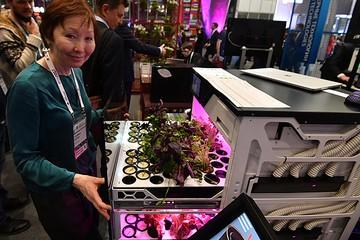 Новый гаджет: электронная «грядка на кухне» за год вырастит свежей зелени на 20 тысяч рублей!