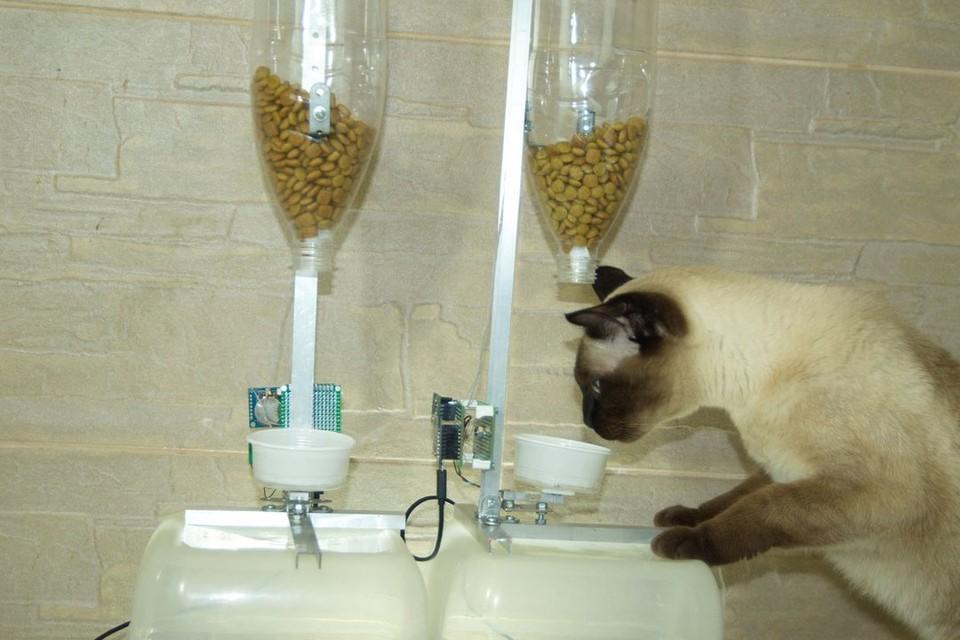 Прототип изобретения Алены Кузнецовой. Фото: catnfit.com