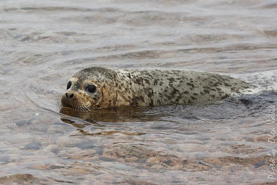 Реабилитационный центр «Тюлень» планирует переезд