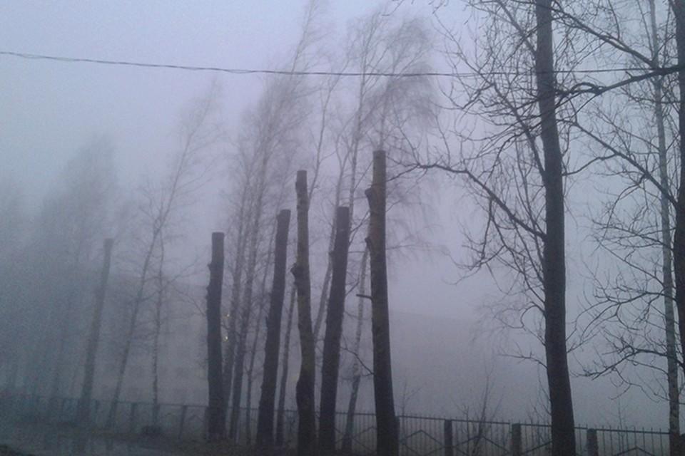 Понедельник в Беларуси будет туманным.