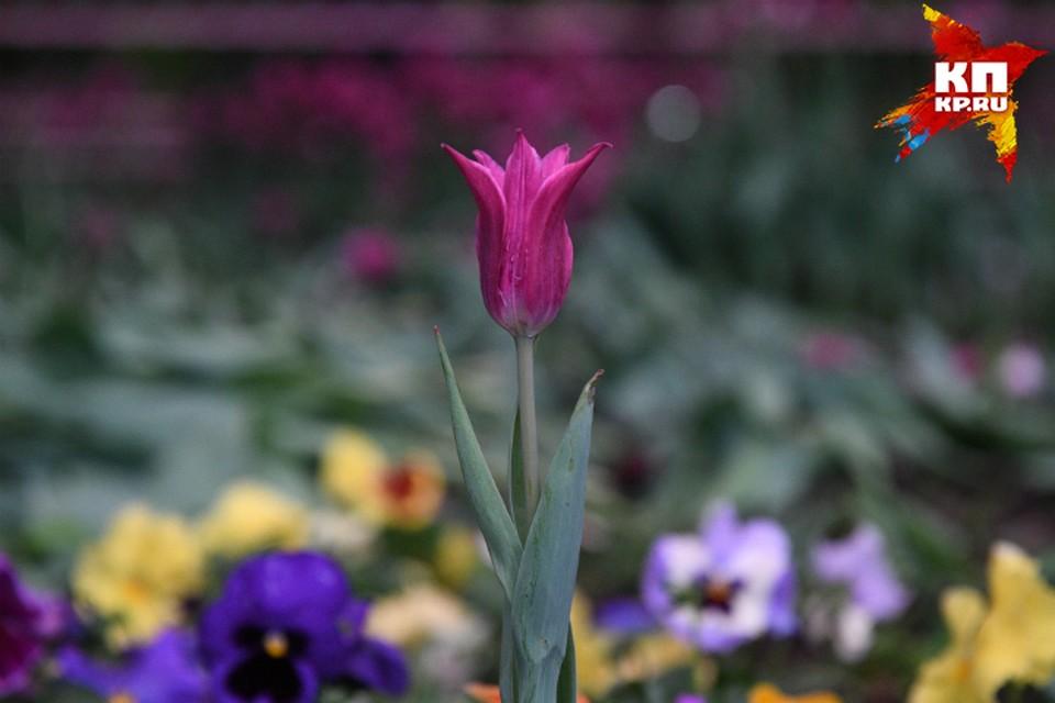 Цветы высадят во всех центральных парках Омска.