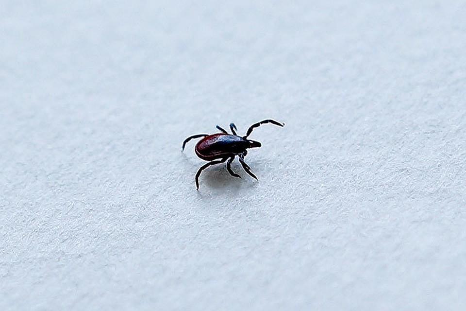 Укус в член жука