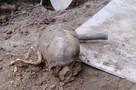 Житель Всеволожского района нашел на своем огороде человеческие кости