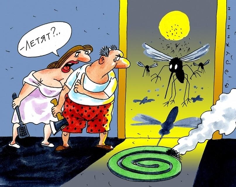 Днем, комары картинки смешные
