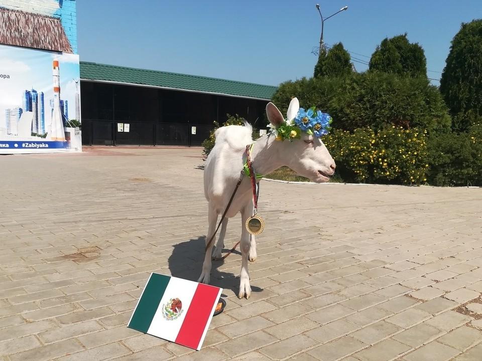 Забияка уверенно выбрала Мексику