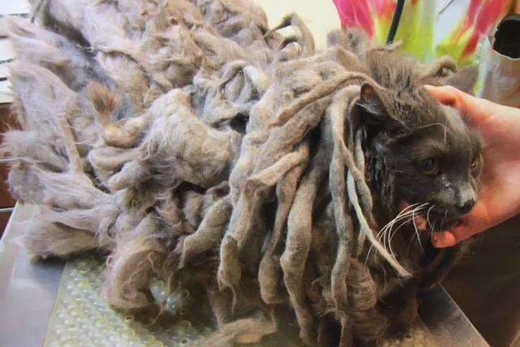 Ветеринары были шокированы состоянием подброшенного кота.