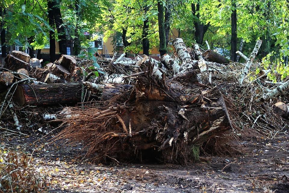 «Это не благоустройство, а уничтожение сквера!» - что происходит в сквере 1905 года в Нижнем Новгороде