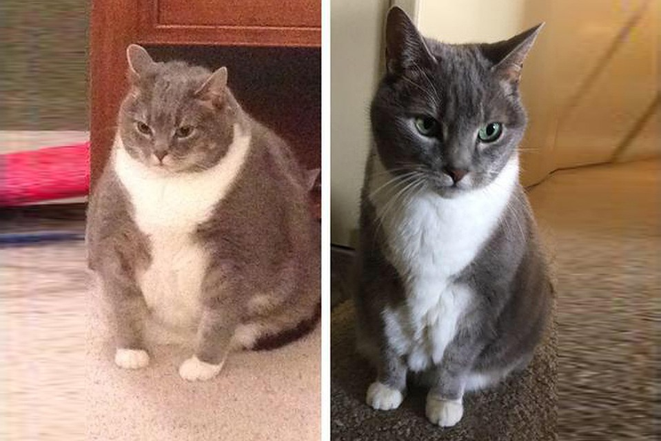 Кот сильно похудел и очень мало ест