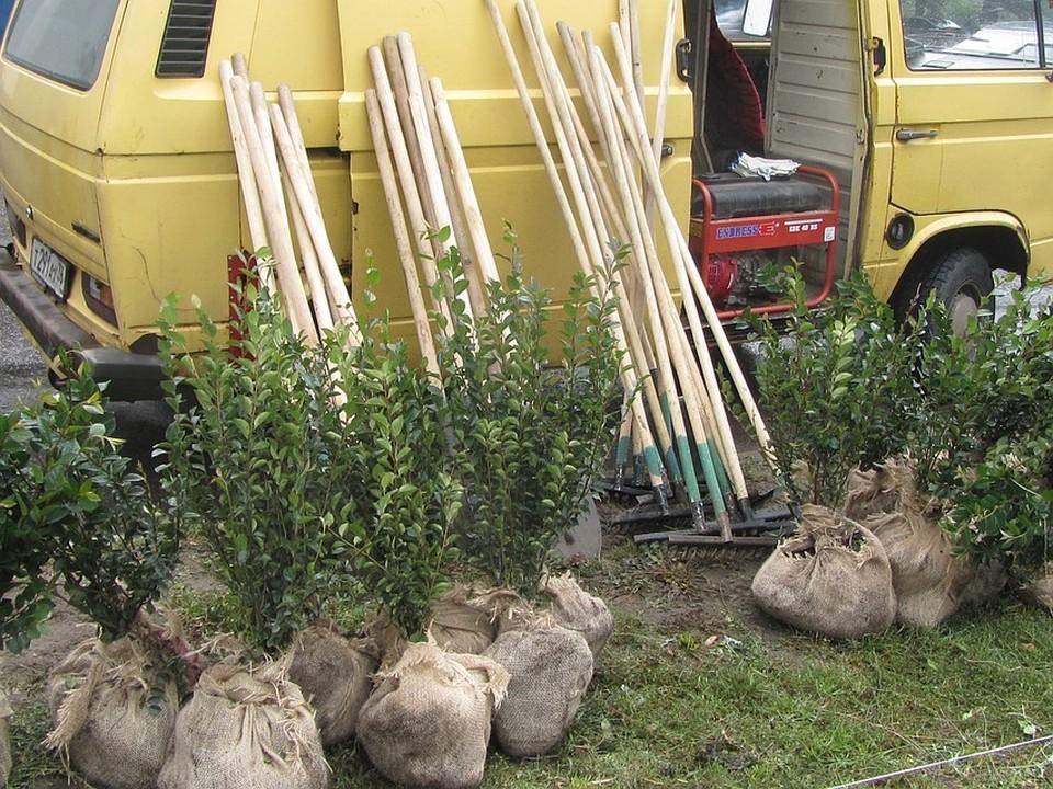 Ежегодно на улицы Воронежа высаживают до пяти тысяч саженцев.