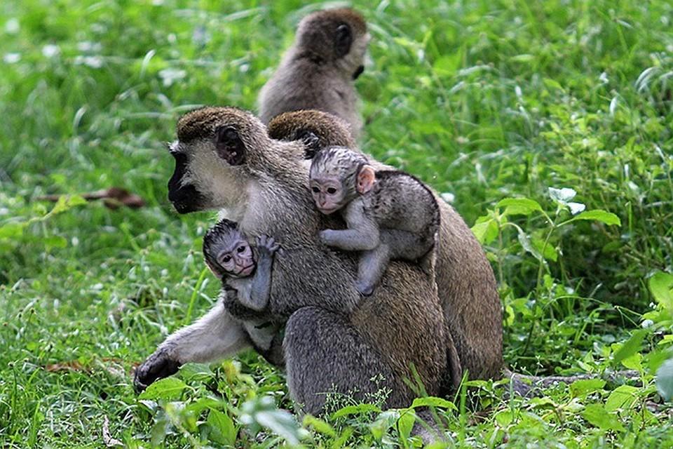 Численность диких животных в мире сократилась на 60%