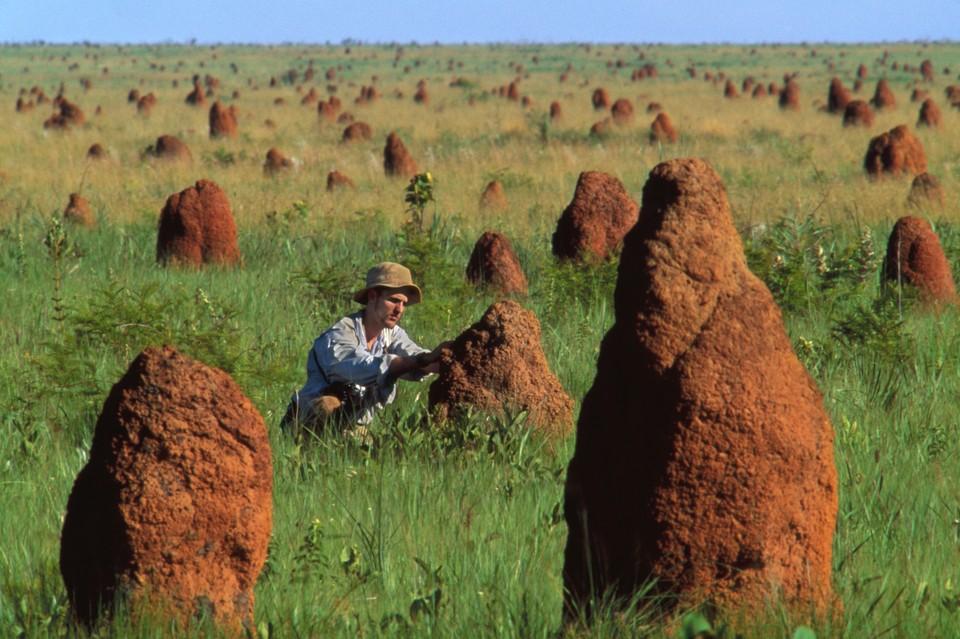 Ученый изучает термитник в одном из национальных парков Бразилии.