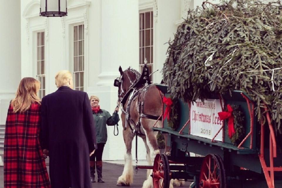 В Белый дом привезли елку. ФОТО: https://twitter.com/FLOTUS/status/1064651522213142529