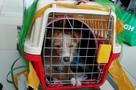 Уральцы спасли щенка, который чуть не стал обедом китайцев