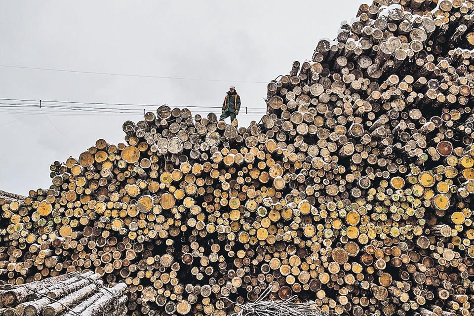 Лесной бизнес стоит на идее «Тайги на Руси много - всю не вырубишь».