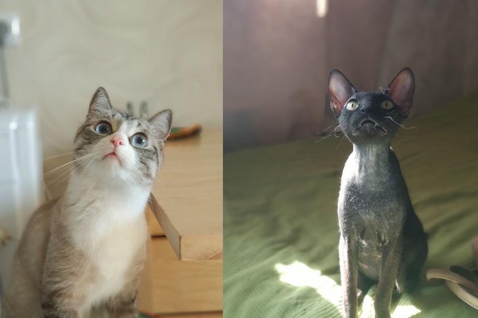 Дарья уверена, что ее питомцев сгубил корм для кошек.