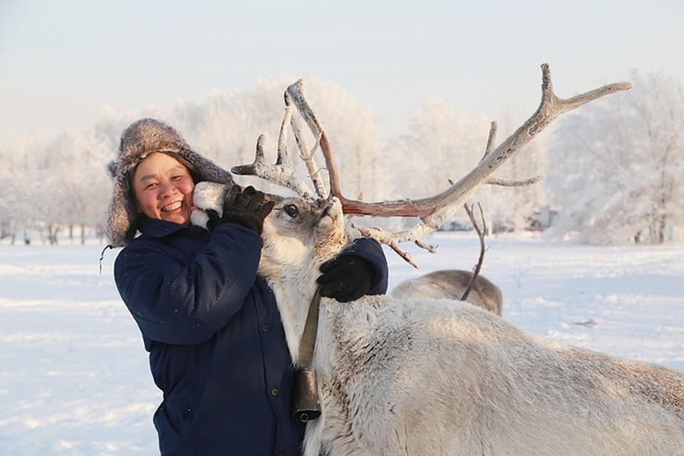 В Красноярском крае на 5 лет запретили срезать панты у северных оленей