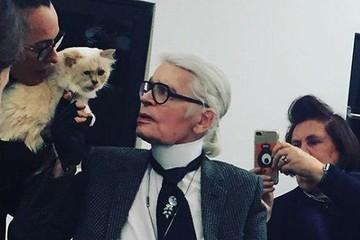Кошка Лагерфельда унаследует половину состояния кутюрье