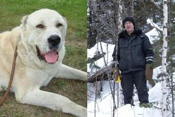 «Я боялся пса и месяц с ружьем ходил»: пенсионер заплатит 50 тысяч рублей за то, что пристрелил соседского алабая