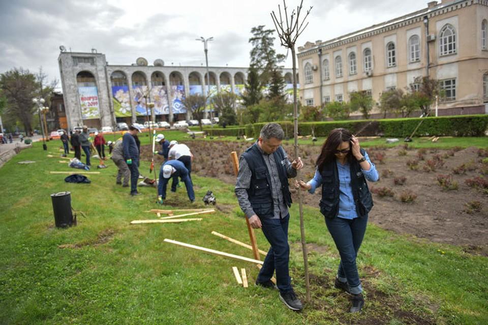 Участники акции посадили 40 саженцев бельгийского клена и березы.