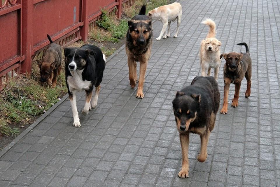 d9e50965cab8 Что делать, если вы встретили стаю собак