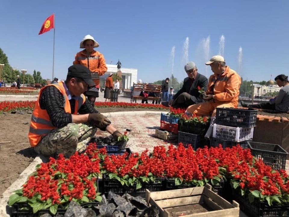 Цветы и фонтаны - как Бишкек встречает май