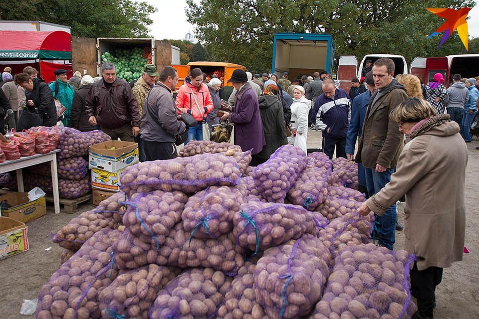 Из-за аномальной жары по осени вырастут цены на картошку?