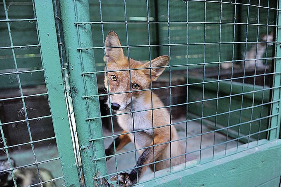 Контрабанда животных в Россию сократилась на треть