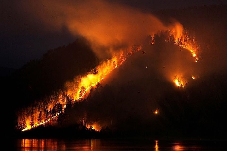 Счетная палата оценила ущерб от лесных пожаров в РФ