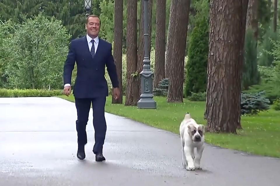 Дмитрий Медведев с щенком Айком