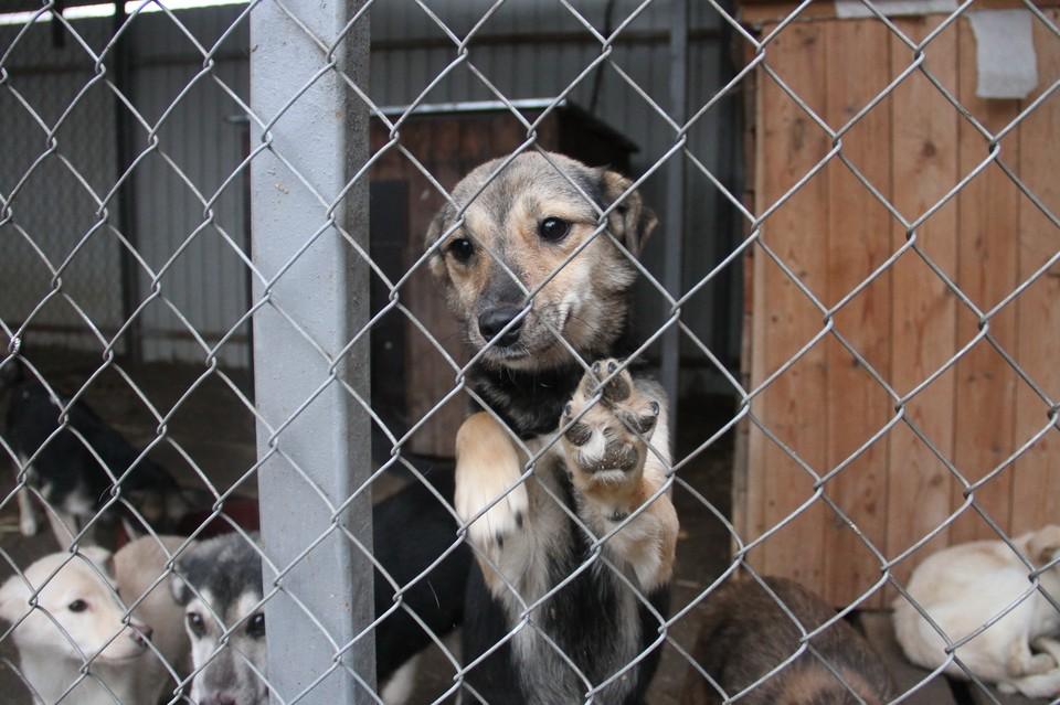 Этим псам очень нужна забота, еда, тепло. А главное - верный человек рядом. Тот, что не предаст