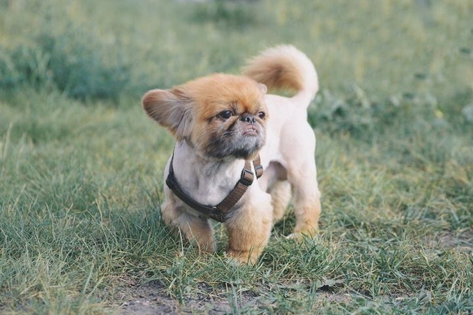 Сибирячка спасла пса от избивающей его хозяйки. Фото: Ольга ТИХОМИРОВА.