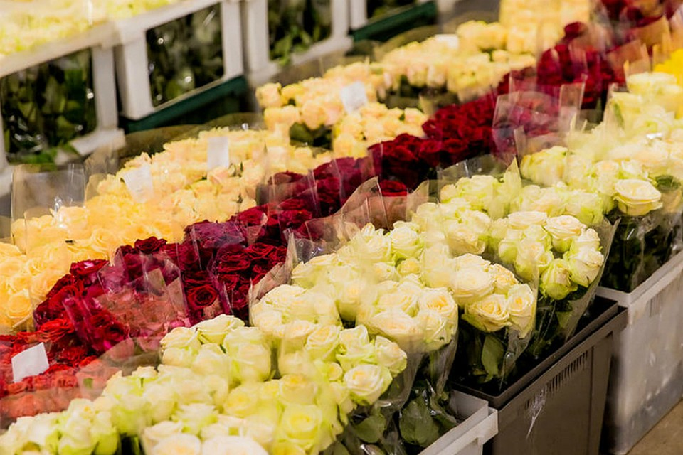 Цветок, цветы из эквадора г. ставрополь оптом