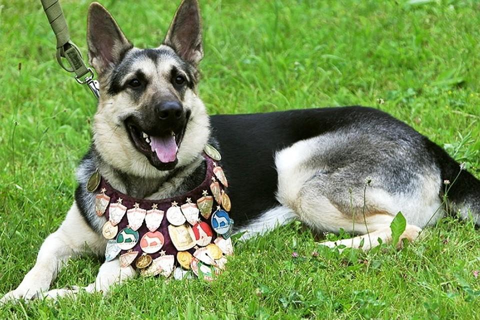 Для поздравительные, картинки служебные собаки