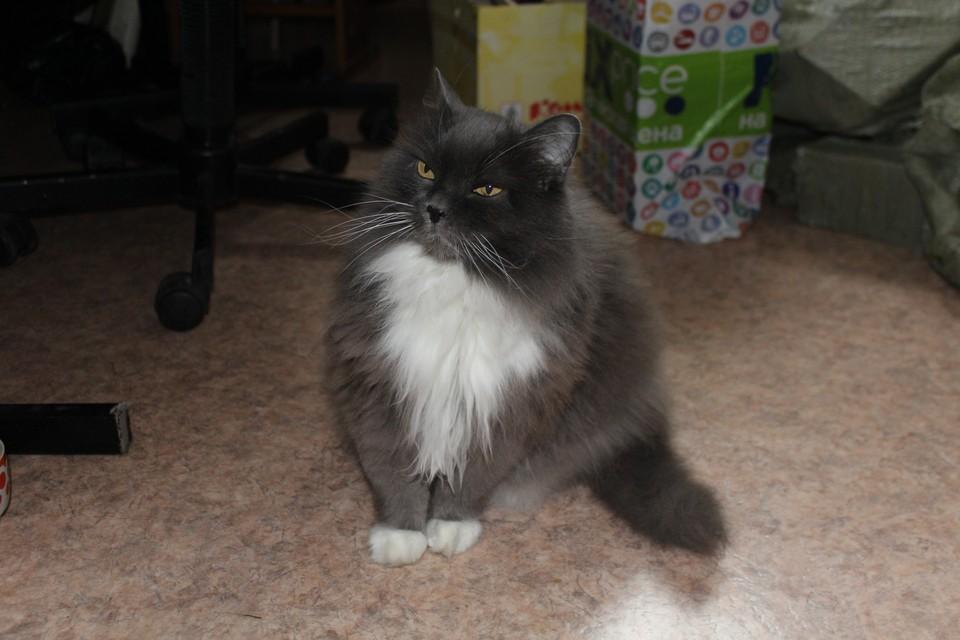 Кошку спасли зимой: она замерзала на улице.