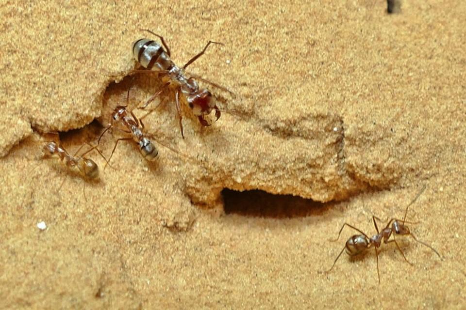Никто не ожидал от муравьем такой прыти, а они стремительно на пьедестал почета влезли.