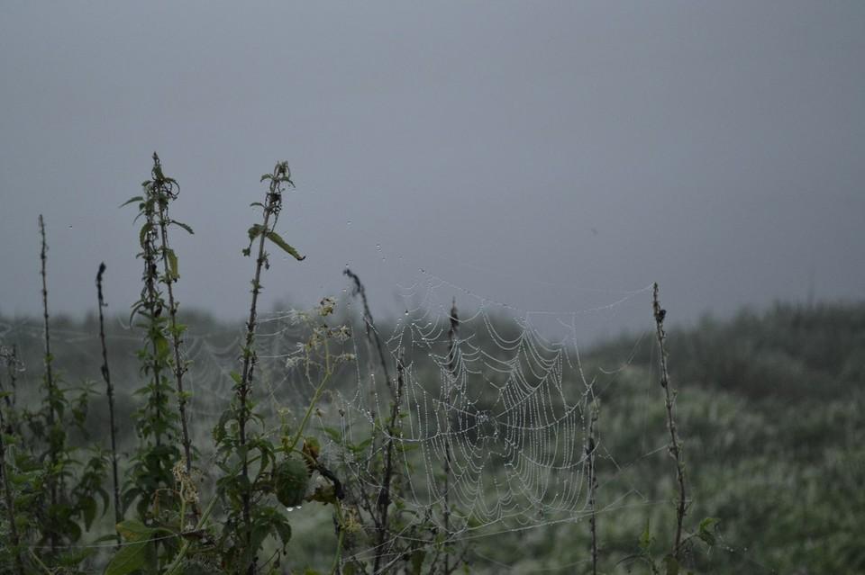 МЧС опровергает, что на Липецк движется ядовитое облако из Украины