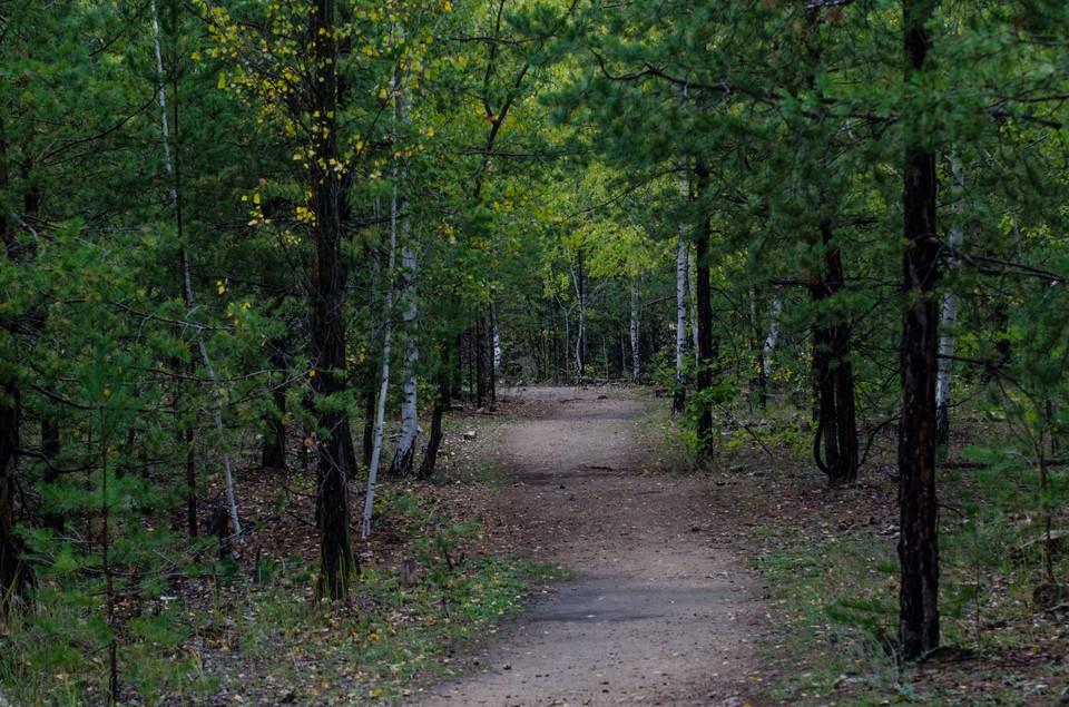 Тела мужчин обнаружили в лесу недалеко от детского лагеря