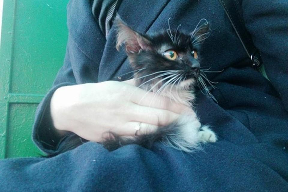 """Этого котенка гомельские спасатели сняли с крошечного пятачка под опорой моста. Волонтеры ищут хозяев для него. Фото: """"Доброта""""."""